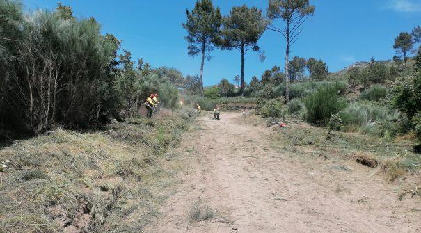 Beneficiação de Estrada Florestal em S. Cipriano