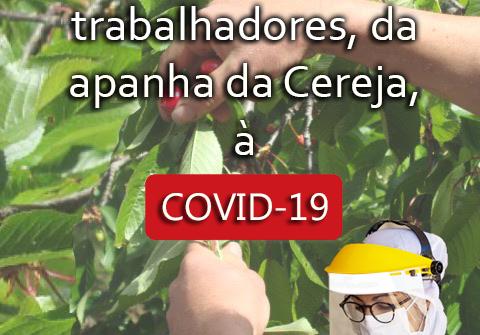 Município testa trabalhadores da apanha da Cereja à COVID-19